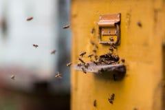 Abejas de la miel que vuelan alrededor de su colmena Fotografía de archivo libre de regalías