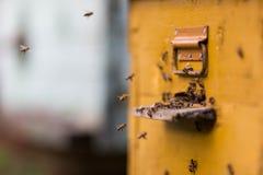 Abejas de la miel que vuelan alrededor de su colmena Fotografía de archivo