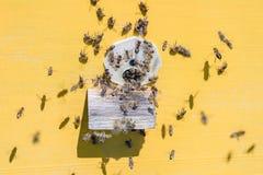 Abejas de la miel que vuelan en una entrada de la colmena amarilla Imagen de archivo libre de regalías