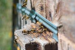 Abejas de la miel que vuelan en una vieja entrada de la colmena seleccionado Fotografía de archivo