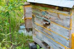 Abejas de la miel que vuelan a la entrada de la colmena de madera del vintage Imagen de archivo libre de regalías