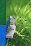 Abejas de la miel que vuelven en la colmena Fotos de archivo libres de regalías