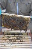 Abejas de la miel quitadas de la colmena Foto de archivo libre de regalías