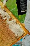 Abejas de trabajador en imagen de Honeycomb Foto de archivo