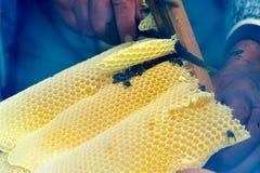 Abejas de trabajador en imagen de Honeycomb Imagen de archivo libre de regalías