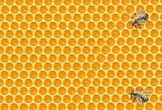 Abejas de trabajador en imagen de Honeycomb Imágenes de archivo libres de regalías