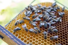 Abejas de trabajador en imagen de Honeycomb Imagenes de archivo
