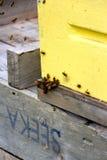 Abejas de trabajadores difícilmente en el trabajo que recoge la miel Fotografía de archivo
