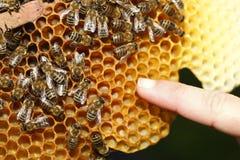 abejas de trabajo Imagen de archivo libre de regalías