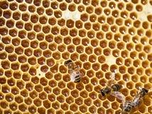 Abejas de trabajo en concepto del trabajo de Honeycomb Fotografía de archivo libre de regalías