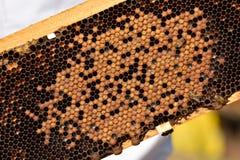 Abejas de trabajo en concepto del trabajo de Honeycomb Fotos de archivo