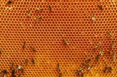 Abejas de trabajo en concepto del trabajo de Honeycomb Imágenes de archivo libres de regalías