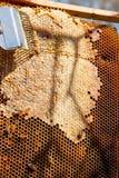 Abejas de trabajo en el panal amarillo con la miel dulce Foto de archivo libre de regalías