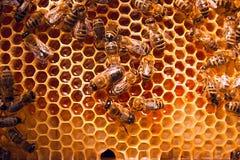 Abejas de trabajo en el panal amarillo con la miel dulce Imagen de archivo