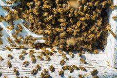 Abejas de trabajo en las células de la miel Fotos de archivo