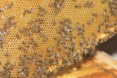 Abejas de trabajo en las células de la miel Foto de archivo libre de regalías