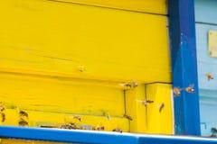 Abejas del vuelo que entran en la colmena de la abeja Foto de archivo libre de regalías