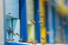 Abejas del vuelo que entran en la colmena de la abeja Imagen de archivo