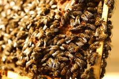 Abejas dentro de una colmena con la abeja reina en el centro Imagen de archivo