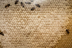 Abejas dentro del cierre de la macro de la colmena para arriba Fotografía de archivo