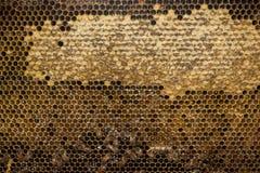Abejas dentro del cierre de la macro de la colmena para arriba Imagenes de archivo