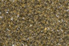 Abejas - destructor de Varroa de la enfermedad Fotos de archivo libres de regalías