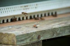 abejas en colmenas de madera Imagen de archivo libre de regalías