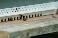 abejas en colmenas de madera Foto de archivo libre de regalías