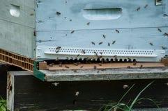 abejas en colmenas de madera Imagen de archivo