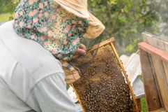 Abejas en abejas de un colmenar en abejas de un colmenar en un colmenar Imagen de archivo