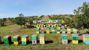 Abejas en el colmenar en el prado muchas casas de abeja, colmenas son producción de la miel en granja El enjambre de las abejas a metrajes
