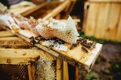 abejas en el marco de la colmena Fotografía de archivo libre de regalías