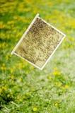 Abejas en el panal en colmenar en la primavera Fotografía de archivo libre de regalías