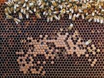 Abejas en el panal con la miel Imágenes de archivo libres de regalías