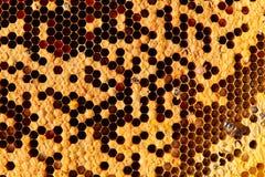Abejas en el panal Primer de abejas en el panal en colmenar en el verano fotos de archivo libres de regalías