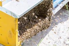 Abejas en honeycells Imagen de archivo libre de regalías