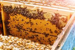 Abejas en la colmena en los panales Célula con la abeja Foto de archivo