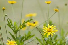 Abejas en la flor Imágenes de archivo libres de regalías