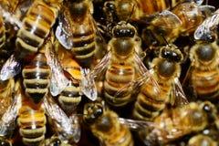 Abejas en la superficie de la colmena, muchas abejas uno al lado del otro, fotografiada con una profundidad del campo baja Fotografía de archivo