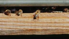Abejas en las entradas materiales de madera a la colmena Foto de archivo