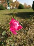 Abejas en las flores en hierba imagenes de archivo