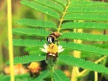 Abejas en naturaleza y flores Imagen de archivo