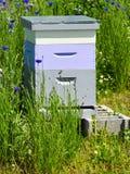 Abejas en una caja de la colmena de la abeja Imágenes de archivo libres de regalías