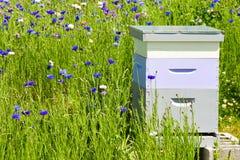Abejas en una caja de la colmena de la abeja Imagen de archivo libre de regalías