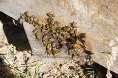 Abejas en una colmena en verano Foto de archivo libre de regalías