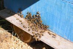 Abejas en una colmena en verano Fotos de archivo