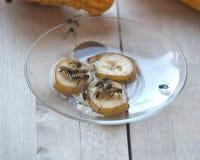 Abejas hambrientas de alimentación Imagen de archivo libre de regalías