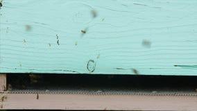 abejas 4K en el puente de la colmena almacen de metraje de vídeo