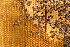 Abejas ocupadas dentro de la colmena con las células selladas para sus jóvenes Imagen de archivo
