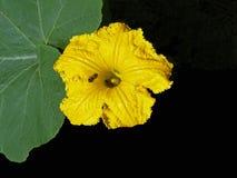 Abejas ocupadas que recogen el polen Foto de archivo libre de regalías